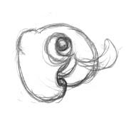 cutesquid